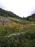布引ハーブ園。