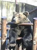クマ牧場。