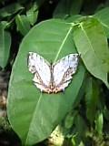 多摩動物公園 昆虫館。