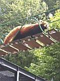 旭山動物園。
