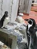 札幌 円山動物園。