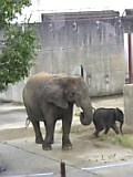 とべ動物園。
