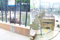 京都市動物園。